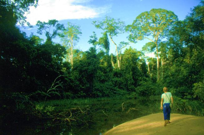 Joachim im Regenwald Brasilien's